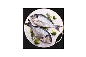 flottebiene.wien Fisch